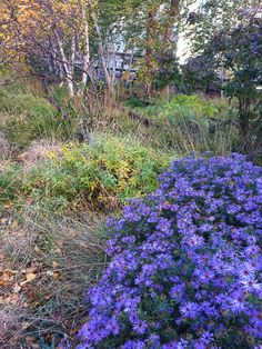 Autumn flowers along the Highline, NYC