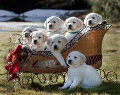 Puppy cart!  Via Aimer la Nature