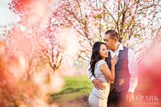 Cherry Blossom pic detail focusing on couple while background is faded