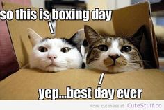 Happy Boxing Day Everyone. but this is… Happy Boxing Day Everyone. Funny Animal Quotes, Funny Animal Pictures, Funny Animals, Cute Animals, Funniest Animals, Animal Pics, Funny Sayings, Animal Sayings, Pet Pictures