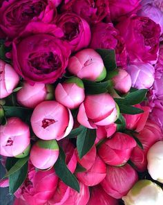 Image may contain: flower, plant and food Peonies Bouquet, Floral Bouquets, Peony, My Flower, Flower Power, Peonies Season, Peonies Garden, Flower Market, Beautiful Flowers