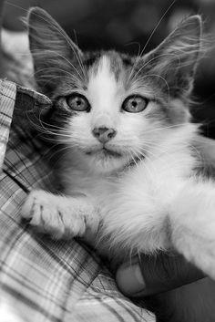 Rescate Animal  photo by Muchin Agurto