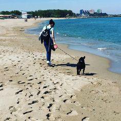 #blacksea #beachlife #beachbunny #frenchie #frenchbulldog #neptun #Sunday #beachlife #România #seaside