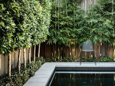 A wall of trees and bamboo help to hide a fence and create a soft wall of green alongside a swimming pool.