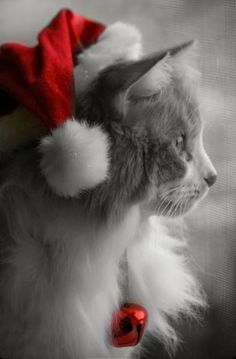 Cute animals,beautiful pictures,pink etc. Christmas Animals, Christmas Cats, Merry Christmas, Christmas Morning, Christmas Time, Christmas Decor, Christmas Ideas, Beautiful Cats, Animals Beautiful
