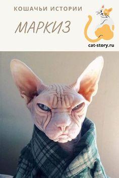 Маркиз — Кошачьи истории Cats, Gatos, Cat, Kitty, Kitty Cats
