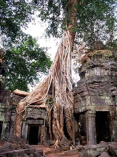 Ta Prohm Temple in Angkor, Cambodia. Reminds me of the Forest Temple from Zelda.