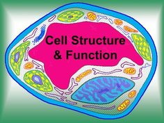 Cell structure and function cell theory originated from the work of cell structure and function cell theory originated from the work of biologists schleiden and schwann in 1838 9 states that all organisms are comp ccuart Choice Image
