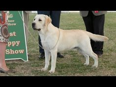 #Windsor 2015 - Best #Puppy in Show #dogs #dogshow #video