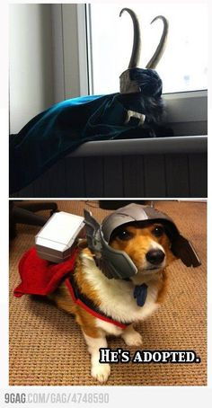 I wanted to name the dog Thor and the cat Loki, but my husband would not let me. He said it would be fine till the cat turned evil.