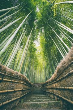 The Sagano Bamboo Forest in Japan knows how to get the most out of the material! Rather than bringing in wood, the walkways are lined with dried bamboo stalks and leaves that have already fallen.    Learn more about this beautiful forest here: http://qoo.ly/b8jen