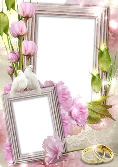 Transparent Wedding Frame with Rings and Doves