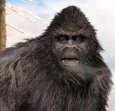 bigfoot sasquatch ... who's your daddy?
