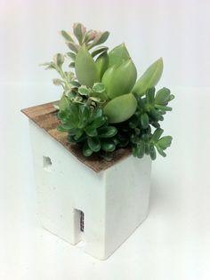 moss house ホワイト寄せ植え003