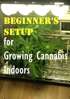 Beginner's Setup for Growing Cannabis Indoors