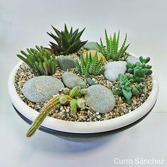 Succulent minigarden