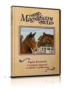 Equus Revisited (DVD)