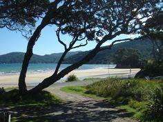 Pohutikawa on Great Barrier Island.....bliss