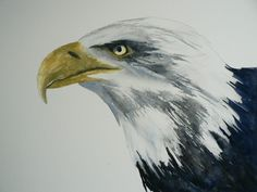Painting an Eagle in Watercolor 1 of 4 #eagle #watercolor #tutorial #bird #painting #art #watercolour #class #lesson #eastwitching #AlisonFennell #YouTube #animal #wildlife #bald #eagle #American