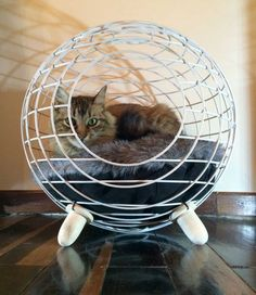 10 Homemade Cat Beds Too Cute to Resist Wire Nest – A handcrafted architectural sphere is perfect for even the most discerning cat. 10 Homemade Cat Beds Too Cute to Resist Lit Chat Diy, Homemade Cat Beds, Niche Chat, Diy Cat Bed, Cat Cave, Unique Cats, Cat Room, Pet Furniture, Pet Beds