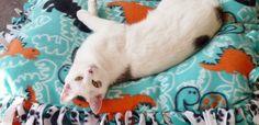 Come fare un cuscino per animali domestici senza cucire – Tutorial