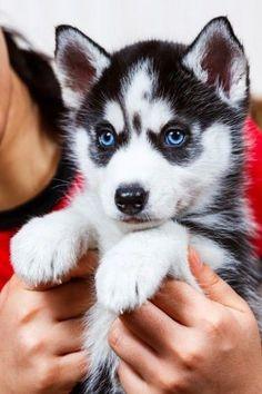 Top 5 Healthiest Dog Breeds