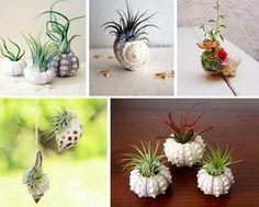 Decorazione con le conchiglie: vasetti per piante aeree