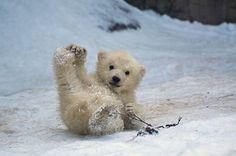 Les animaux jouent dans la neige