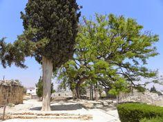 lyhyt matka luonto: Kaupunki kypros