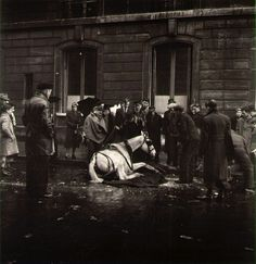 Robert Doisneau, The Fallen Horse, Paris on ArtStack #robert-doisneau #art
