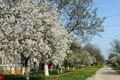 Spring in the village in Vojvodina, Serbia