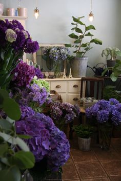 Gorgeous Hydrangea............