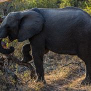 Tracking Instincts | krazywithtravel African Wild. Sabi Sand. Kruger National Park. Elephant Summit Lake, Working Blue, Spring Lake, Kruger National Park, African Safari, Narnia, Wildlife, Elephant, Track