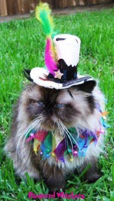 Party Hat - Mad Hatter top hat for cat or dog and party collar Mad Hatter Costume Kids, Mad Hatter Top Hat, Mad Hatter Party, Movie Halloween Costumes, Toy Story Costumes, Cat Costumes, Peter Pan Costumes, Mad Tea Parties, Kids Costumes Girls