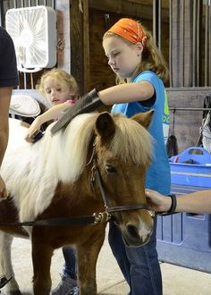 Horse Grooming and DIY Farrier - Proper horse grooming is essential. We share how and all our favorite horse grooming tools at Rural Living Today...