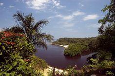 Дождевые леса Амазонии  бассейн реки Амазонки, Бразилия
