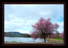 Vernonia Lake Spring 2014 Gayle Rich-Boxman Copyrighted All Rights Reserved 2014 www.lakehomesatfishhawk.com
