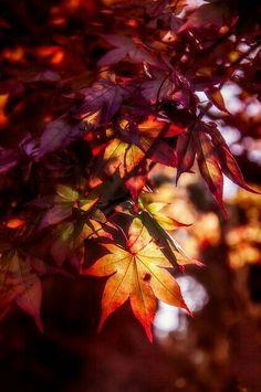 Autumn love. . .