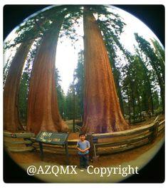 Arielo y los arboles gigantes del parque nacional de sequoias en California, USA #Tampico, #rosa, #rosas, #rose, #roses, #winter,  #vinter, #invierno, #Faldo,  #Dog, #bollywood, #india, #rajasthan, #budha, #buda, #Castle, #halloween, #Avion, #cafe, #coffee, #kahve, #kavhe, #China, #japan, #asian, #korea, #nicaragua, #tea, #cuba, #arab, #uae, #saudi_arabia, #muslim, #ramadan, #turk, #kurdish, #iranian, #persian, #pakistani, #hindi, #mexican, #morrocan, #magrebi, #sephardim, #israel, #jewish…