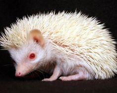 21 fotografias de animais albinos