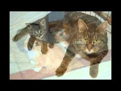 CELEBRATING FOSTER DAD JOHN'S 50TH LITTER OF KITTENS! - YouTube
