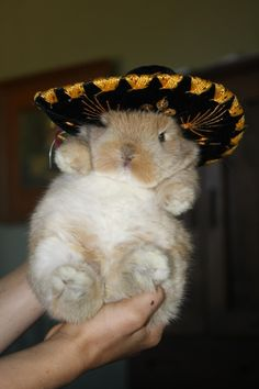 This is a bunny wearing a sombrero. - Imgur