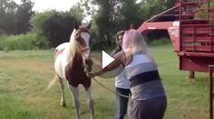 Geschichten wie diese, schreibt nur das Leben: Nach man ihr ihr Pferd gestohlen hatte, glaubte wohl kaum einer mehr daran, dass das Pferd jemals wieder...
