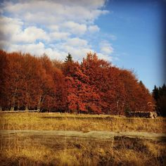 Autumn. #trees #autumn #fall #autumncolours #autumncolors #colours #sky #cloud #autumndays #romania #hiking #walking #mountains #forest #wood #season #leaves #red #brown #golden #colors