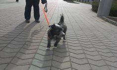 My puppy... :-)