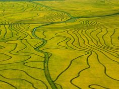 Aerial view of rice fields, Uruguay