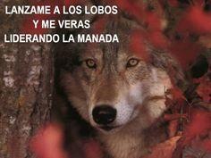 Lanzame a los lobos y me veras  liderando la manada.
