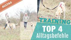 4 Kommandos im Alltag – Weiter | Straße | Andere Seite | Guck – Hundeerz...