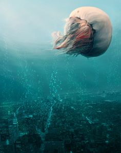 jellyfish by ~Sunbas
