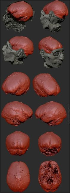Ancient Egyptian dignitary's face and brain reconstructed